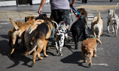 Dog-walking startup Wag