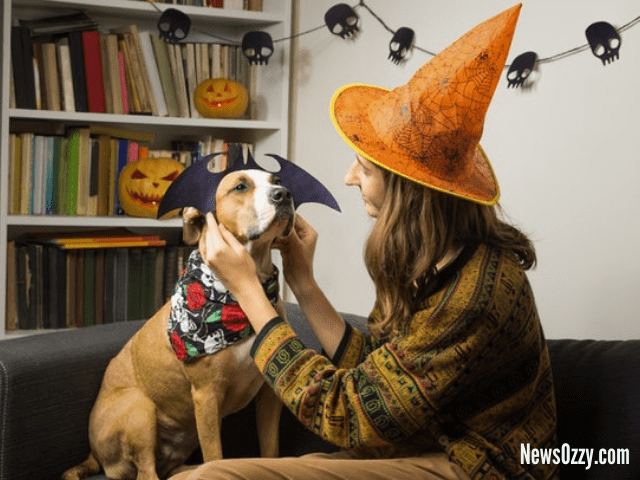 Halloween captions for your dog costume