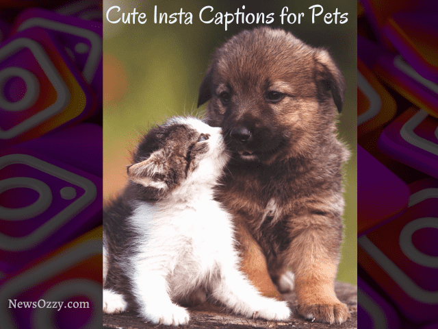 IG Captions for cute pets