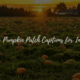 best pumpkin patch captions