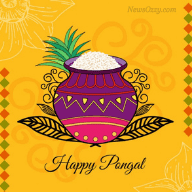 WhatsApp profile pic for Pongal festival